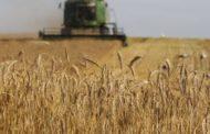 روسيا تصدر مليون طن من القمح إلى سوريا خلال عام 2021