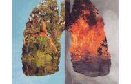 حرائق الأمازون.. رئة العالم تحترق