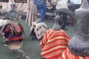 فعاليات وعروض فلكلورية بألوان التراث الشعبي الجزراوي في مهرجان الحسكة