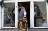 """منظمات بريطانية تستعد لتدريب كلاب لملاحقة """"كوفيد- 19"""""""