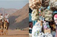 سعوديون يلوذون بالصحراء تفادياً للفيروس وتونسيون يبحثون عن عشبة مضادة لها!!
