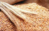 الحكومة السورية تحدد سعر شراء القمح للموسم الحالي بـ400 ليرة للكيلو غرام الواحد