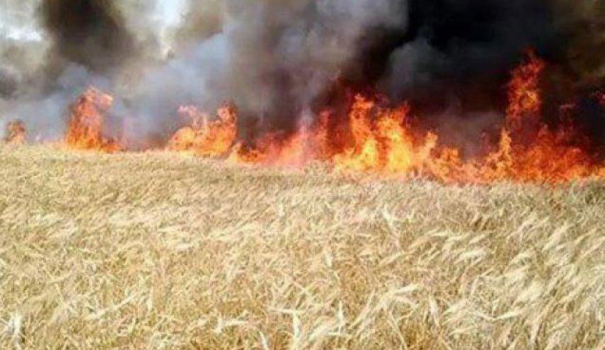 حرائق تلتهم الأراضي الزراعية في مناطق التماس بشرق الفرات.. والمرصد السوري يحمل القوات التركية والفصائل الموالية لها المسؤولية