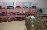 بلاغ من عمال فندق صيني ينقذ مئات القطط قبل ذبحها وأكلها!!