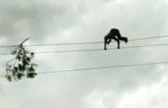 عامل هندي يغامر بحياته لإزالة فرع شجرة تسبب في انقطاع الكهرباء..
