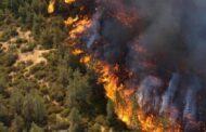حرائق تلتهم الغابات والأشجار الحراجية في أرياف حماة واللاذقية وإدلب