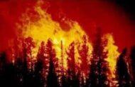 تضرر 4500 طن من ثمار الزيتون و17 ألف طن حمضيات جراء الحرائق ومنحة حكومية للقرى المتضررة