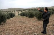 أكراد من عفرين السورية يزرعون عشرات الآلاف من أشجار الزيتون في إقليم كردستان العراق
