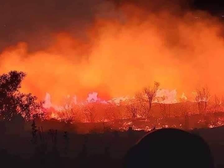 حرائق طرطوس.. تضرر 3972 أسرة وأكثر من 12 ألف دونم أراضي زراعية