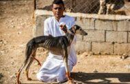 تربية كلاب السلوقي مهنة رائجة في قرية بشمال سوريا