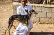 شاب سوري يتحدث عن مهنة تربية وبيع الكلاب السلوقية وتصديرها إلى دول الخليج!