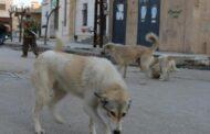 ريف دمشق.. وفاة طفلين إثر تعرضهما لعضة كلاب مسعورة.. ومبادرات أهلية لملاحقة الكلاب في ظل عدم استجابة المجالس البلدية
