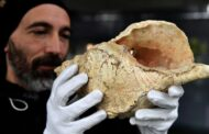 صوت المحارة أقدم آلة موسيقية عمرها 18 ألف سنة تصدح من جديد