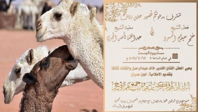 دعوة لحفل زفاف ناقة وجمل... ماذا قال عنها الفنان خالد عبدالرحمن؟