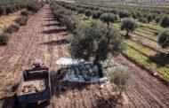 هيومن رايتس وتش: الحكومة السورية تسرق أراضي المعارضين في محافظتي إدلب وحماة